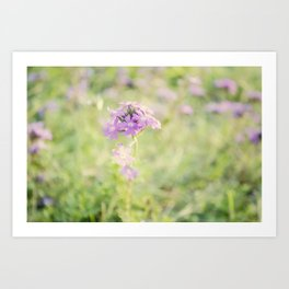 Soft Flower Art Print
