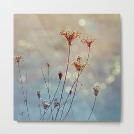 Soft Queen Anne's Lace and Bokeh Metal Print