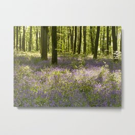 The Bluebells of Micheldever Woods Metal Print