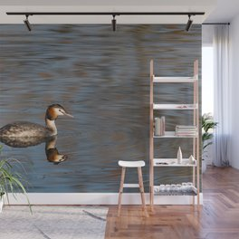 Great crested grebe swims in the calm waters Wall Mural