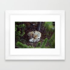 Sleeping Fox Framed Art Print