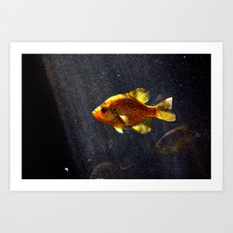 Something Fishy Art Print