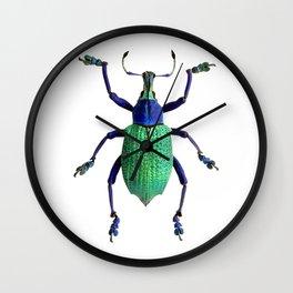 Eupholus Weevil Beetle Wall Clock