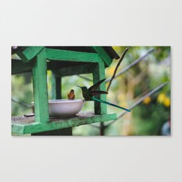 Hummingbird feeding time Canvas Print
