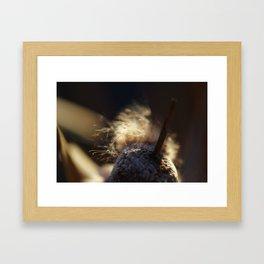 bullrush at dawn Framed Art Print