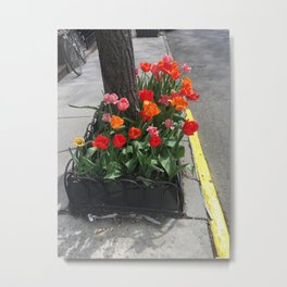 Tulips from the Sidewalk Metal Print