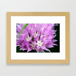 Macro Chive Blossom 4 Framed Art Print