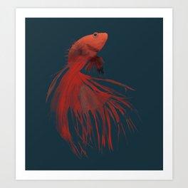 Siamese fighting fish Art Print