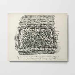 The fruit grower's guide  Vintage illustration of grapes in a flat basket Metal Print