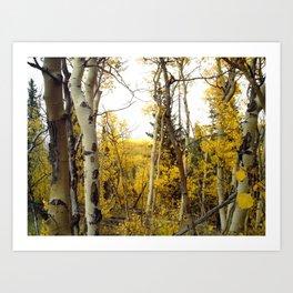 An Aspen Groves View Art Print