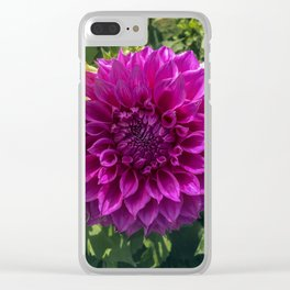Dahlia In The Garden / 42 Clear iPhone Case