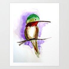 Hummingbird A Art Print