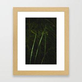 After the Rain #1 Framed Art Print