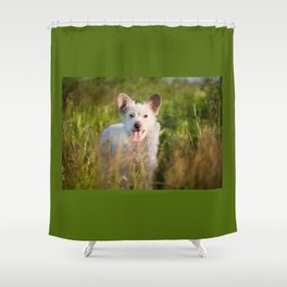 Single white stray tyke dog at the meadow Shower Curtain