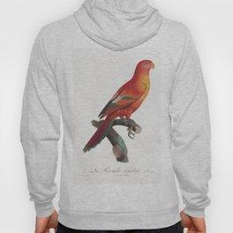 The Crimson Shining Parrot Prosopeia splendens from Natural History of Parrots (1801-1805) by Franco Hoody