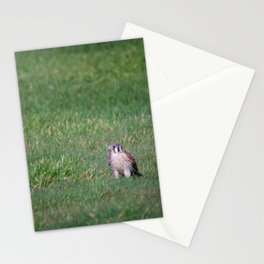 An American Kestrel Falcon catches an earthworm as big as its body for a meal Stationery Cards