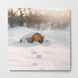 Footsteps In Snow | Winter Photography | Winter Scene With Footsteps In Snow  Metal Print