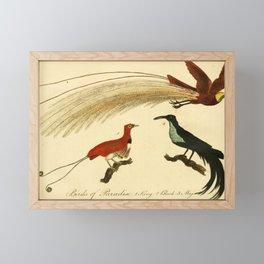 Vintage Print - Bullock's London Museum & Pantherion (1812) - Birds of Paradise Framed Mini Art Print