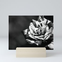Different but beautiful, black and white wild rose flower photography Mini Art Print