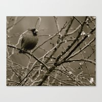 cardinal Canvas Prints featuring Cardinal by Sophie Green