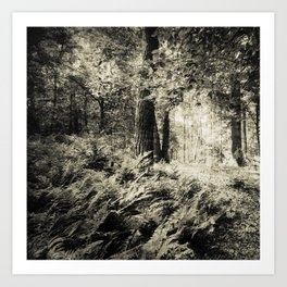 Woodland in black and white Art Print