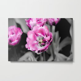 Soft Pink and White Tulips Metal Print