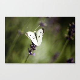 Butterfly Dream 1 Canvas Print