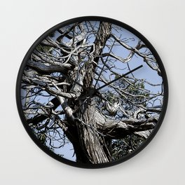 SUN-BLEACHED WINDSWEPT JUNIPER Wall Clock
