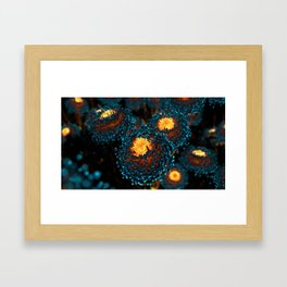 Electric Dahlia Framed Art Print