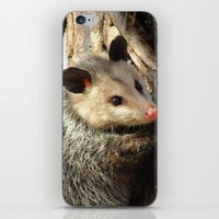 alabama iPhone & iPod Skins featuring Alabama Possum by Chuck Buckner