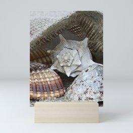 Seashells Mini Art Print