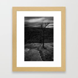 Rooted in stone Framed Art Print
