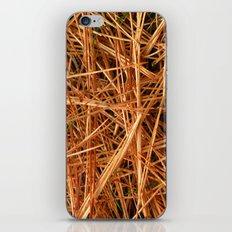 Pine Needles iPhone & iPod Skin