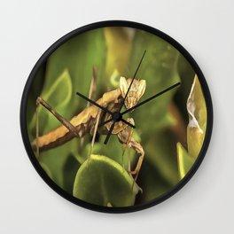 Praying Mantis On Green Garden Background Wall Clock