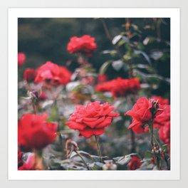 roses smell like spring Art Print
