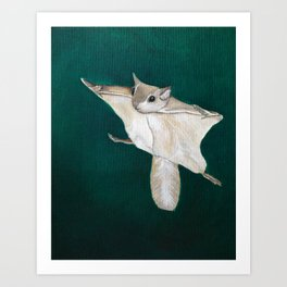 flying squirrel Art Print