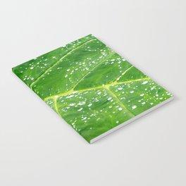 Morning Dew Notebook