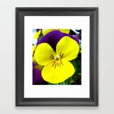 Purple Yellow Flower Framed Art Print