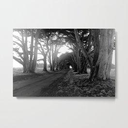 Cypress Tree Tunnel Metal Print