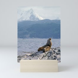 Sea lion near Ushuaia Mini Art Print