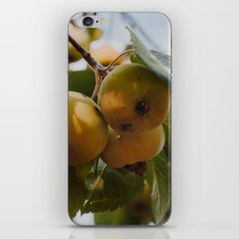 Green Apples on a Tree iPhone Skin