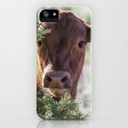Shy Calf iPhone Case