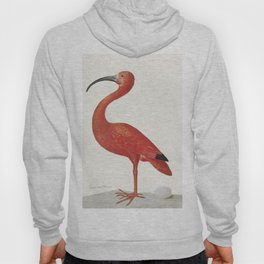 Scarlet Ibis with an Egg (1699-1700) by Maria Sibylla Merian Hoody