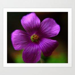 Azedinha Flower Art Print