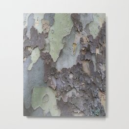 sycamore bark with a green tinge Metal Print