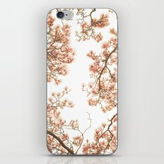 Magnolia Tree Looking Up iPhone & iPod Skin