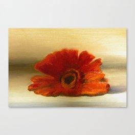 Gerber Daisy  Canvas Print
