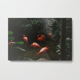 Flamingo bussiness Metal Print