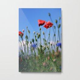 poppy flower no10 Metal Print