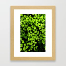 Maidenhair Ferns Framed Art Print